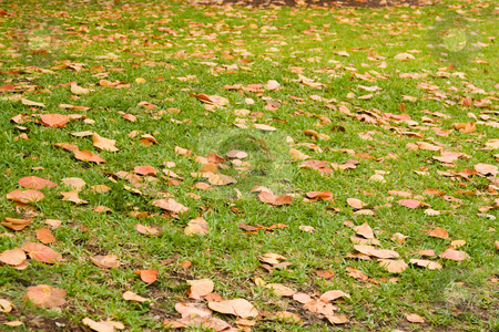 Autumn leaves on grass stock photo, Scene of colored leaves fallen on green grass by Jose Wilson Araujo