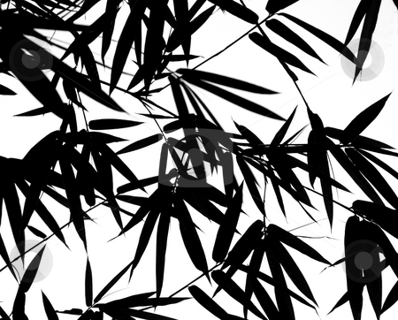 Bamboo Leaves Silhouette Background