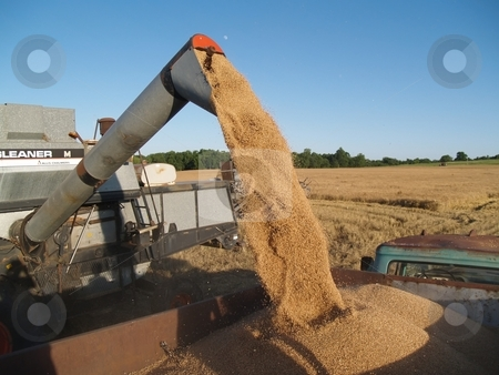 Harvest time stock photo, Many ways of the harvesting wheat by Michelle Bergkamp