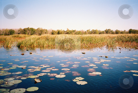 Marshland stock photo, Marsh showing lilypads and marshgrass with trees in the distance by Marburg