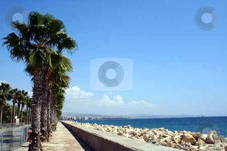 Palm Trees by beach stock photo, Palm trees by beach in resort of Larnaca, Cyprus. by Martin Crowdy