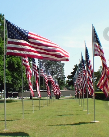Memorial Day flags stock photo, United States Flags flying in a cemetary on Memorial Day by Michelle Bergkamp