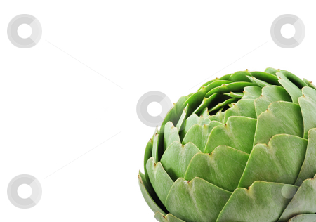 Large Green Globe Artichoke On White stock photo, Green artichoke on angle with empty copy space by Mark S