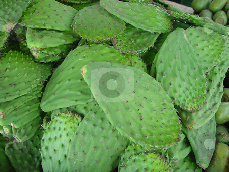 Cactus Leaves stock photo, Fresh Cactus leaves at the market by Jack Schiffer