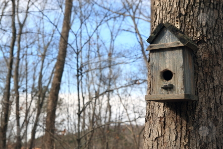 Bird House stock photo, Bird real estate on tree by Jack Schiffer