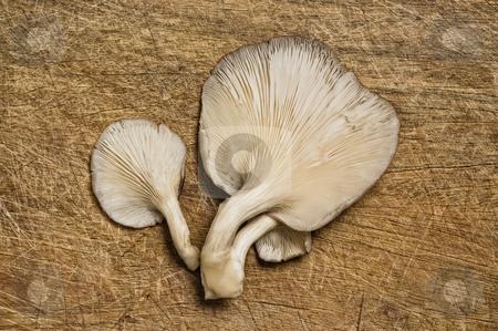 Fresh edible mushrooms stock photo, Fresh edible mushrooms on a wooden table. by Pablo Caridad