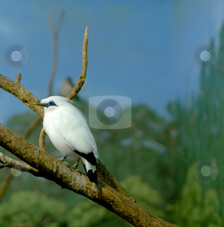 White Bird stock photo, A black and white bird perched on a tree branch by Richard Nelson