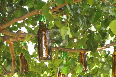 illas Cies - Página 4 Cutcaster-photo-100041499-Beer-Tree