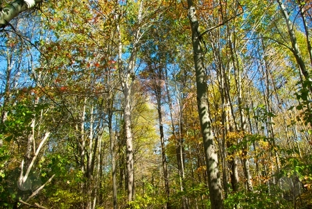 Forest of Color stock photo, Changing forest leaves in autumn. by Charles Jetzer