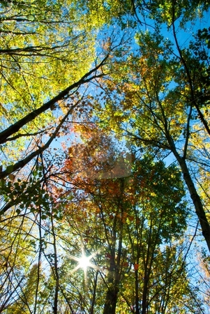 Autumn Foliage and Sun from Below stock photo, Looking up at autumn foliage, sun, and blue sky. by Charles Jetzer