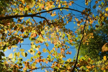 Branching Out stock photo, Autumn foliage and branches. by Charles Jetzer