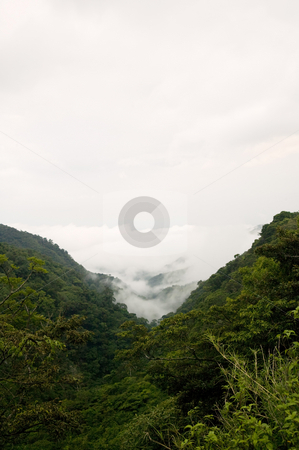 Costa Rica Cloud Forest stock photo, Clouds rolling into Monteverde in Costa Rica by Scott Griessel