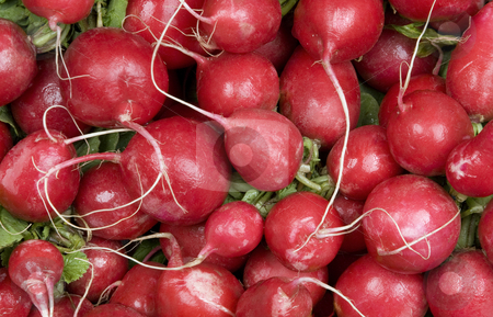 Radishes stock photo, Many red radishes against a leafy background by Scott Griessel