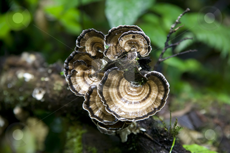 Jungle Fungus stock photo, Close up of a fungus in the jungle in Central America. by Scott Griessel