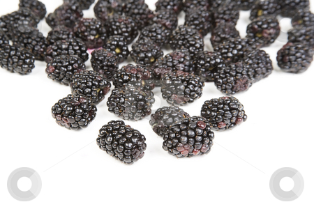 Blackberries stock photo, Closeup of dark purple blackberries on a bright whit background by Scott Griessel