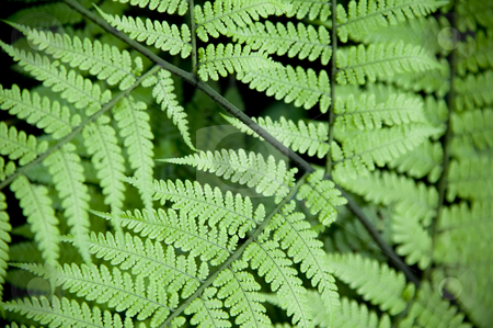 Jungle Fern stock photo, Close Up of Leaves on a Jungle Fern by Scott Griessel