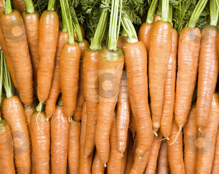Bright Orange Carrots stock photo, Many orange carrots against a leafy background by Scott Griessel