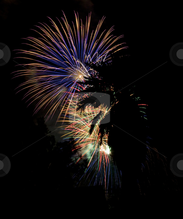 California Fireworks stock photo, Fireworks behind a palm tree in silhouette by Scott Griessel