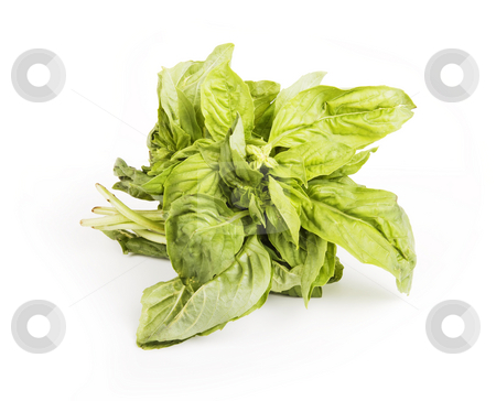 Basil stock photo, Small bundle of leafy green basil herb by Scott Griessel