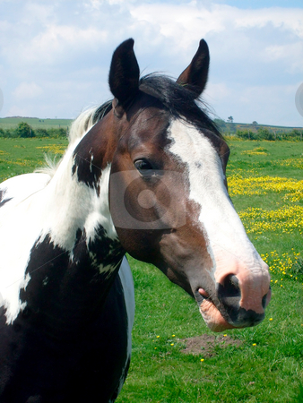 Portrait of horse on farm stock photo, Portrait of horse on farm in English countryside, North Yorkshire Moors, England. by Martin Crowdy