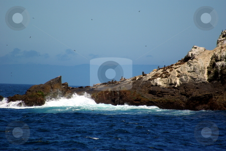 Farallon Islands California stock photo, Seals bask in the sun on the rocky edge of one of the Farallon Islands. by Lynn Bendickson