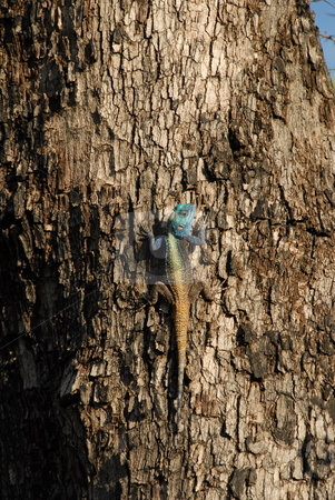 Lizard on bark stock photo, Lizard climbing the bark on a tree by Johnny Griffin