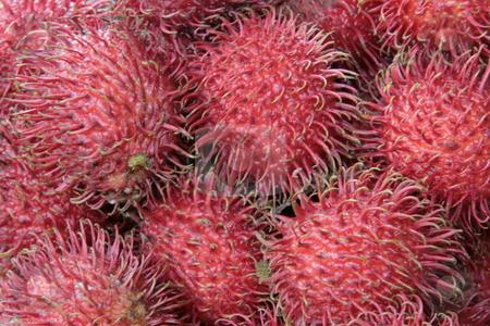 Rambutan fruit stock photo, Closeup of a red hairy rambutan fruit by Jonas Marcos San Luis