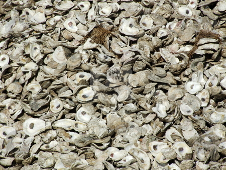 Shucked Oyster Shells stock photo, A lot of shucked oyster shells outside a seafood eatery by Marburg