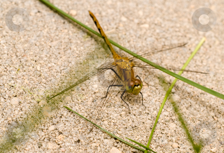 Dragonfly stock photo, A dragonfly resting on some cement outside by Richard Nelson