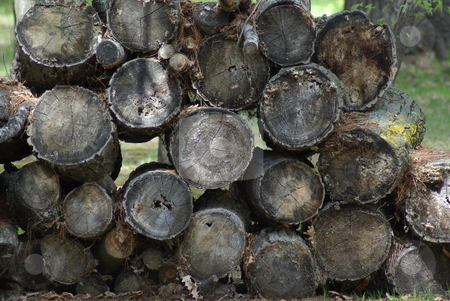 Firewood: Logs in a Stack stock photo, When you are in a forested area logs stacked like these are a common site. by Dennis Thomsen