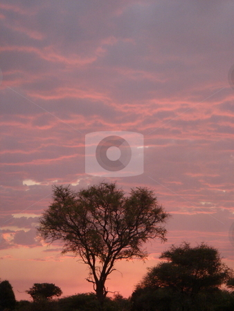 African sunset stock photo, An african sunset and purple sky. by Johnny Griffin