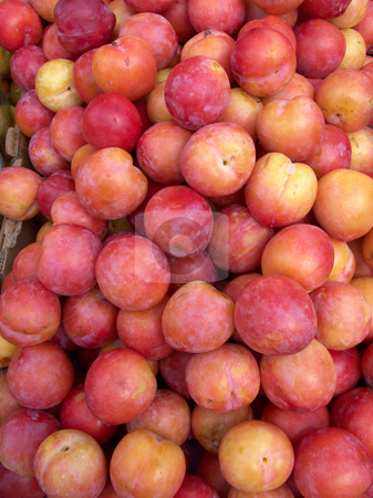 Laetitia plums. stock photo, Laetitia plums. by Stephen Rees