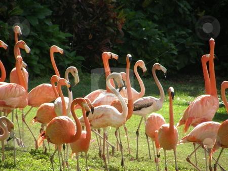 Flamingo stock photo, Pretty Pink Flamingo by Ritu Jethani