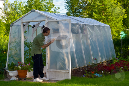 Man Painting Greenhouse stock photo, A young male painting a personal greenhouse white by Richard Nelson