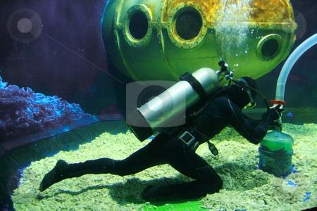 Scuba diver stock photo, Scuba diver cleaning a huge aquarium tank by Jonas Marcos San Luis