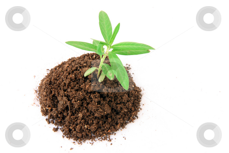Soil and plant stock photo, Small plant with soil from above isolated on white background by EVANGELOS THOMAIDIS