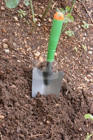 Digging the garden stock photo, Garden and tools metallic digging shovel in soil and small plants by EVANGELOS THOMAIDIS