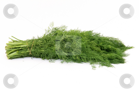 Dill isolated stock photo, Bouquet of fresh dill isolated on white background by EVANGELOS THOMAIDIS
