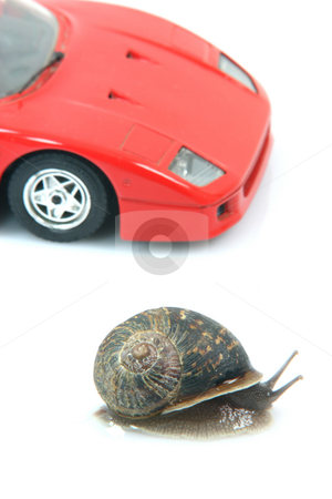 Sports snail stock photo, Racing comon garden snail and sports car background isolated humor concepts by EVANGELOS THOMAIDIS