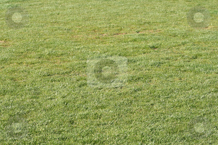 Green grass background stock photo, Green grass background texture from soccer stadium by EVANGELOS THOMAIDIS