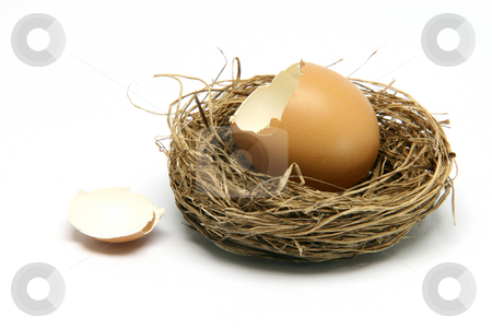 Broken egg in nest stock photo, Broken egg in nest isolated on white background by EVANGELOS THOMAIDIS