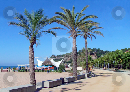 Calella Promenade Spain stock photo, Palm trees on beach promenade in resort of Calella on Costa Brava Spain. by Martin Crowdy