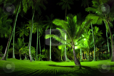 Green Palm Trees at Night stock photo, A long exposure at night of palm trees and bright green grass at a resort in Micronesia by A Cotton Photo