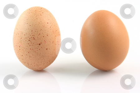Different eggs stock photo, Two eggs one with spots and one with out spots isolated on white background difference concepts by EVANGELOS THOMAIDIS