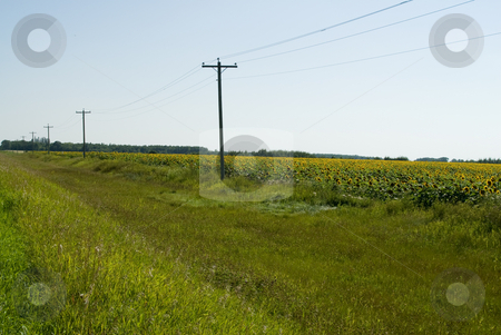Prairie Ditch stock photo, Roadside view of a ditch in the prairies with a sunflower field on one side by Richard Nelson