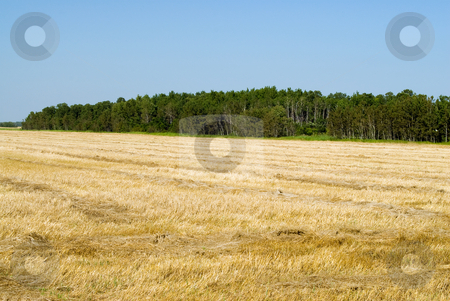Harvested Field stock photo, A freshly harvested field shot on a sunny day by Richard Nelson