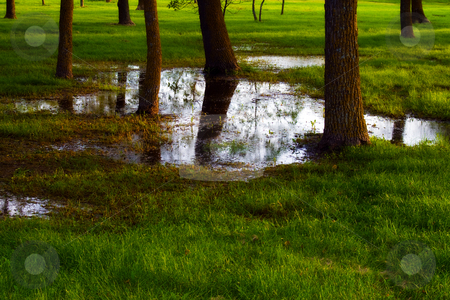 Wet Park stock photo, A public park after a heavy rainfall, is flooded with water by Richard Nelson