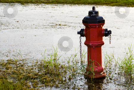 Fire Hydrant stock photo, A red fire hydrant located in some flooded grass by Richard Nelson