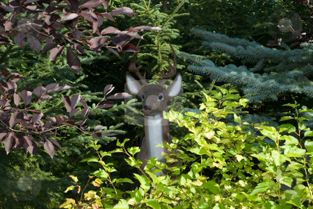 Fake Deer stock photo, A hunters view of an artificial deer hiding in the bush by Richard Nelson