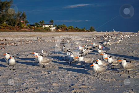 Birds stock photo, A group of birds standing on a beach. by Lucy Clark